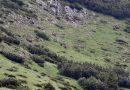Întâlnire cu o ursoaică şi puiul ei în Parcul Naţional Retezat