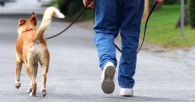 Plimbarea câinelui l-a costat peste 3000 de lei