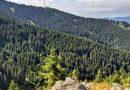 Pădurile din județul Hunedoara, pe locul trei la nivel național