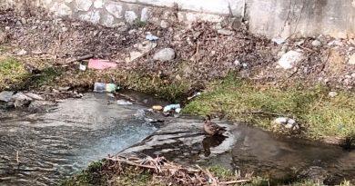 Rațe sălbatice, zemuri puturoase și gunoaie, în centrul Petroșaniului