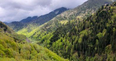 Aproape 650 de hectare  de păduri cvasivirgine, în Ocolul Silvic Petroșani